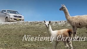 Transport dla Misjonarzy